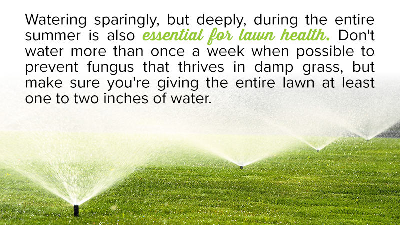 Watering sparingly, but deeply, during the entire summer is also essential for lawn health. Don't water more than once a week when possible to prevent fungus that thrives in damp grass, but make sure you're giving the entire lawn at least one to two inches of water.