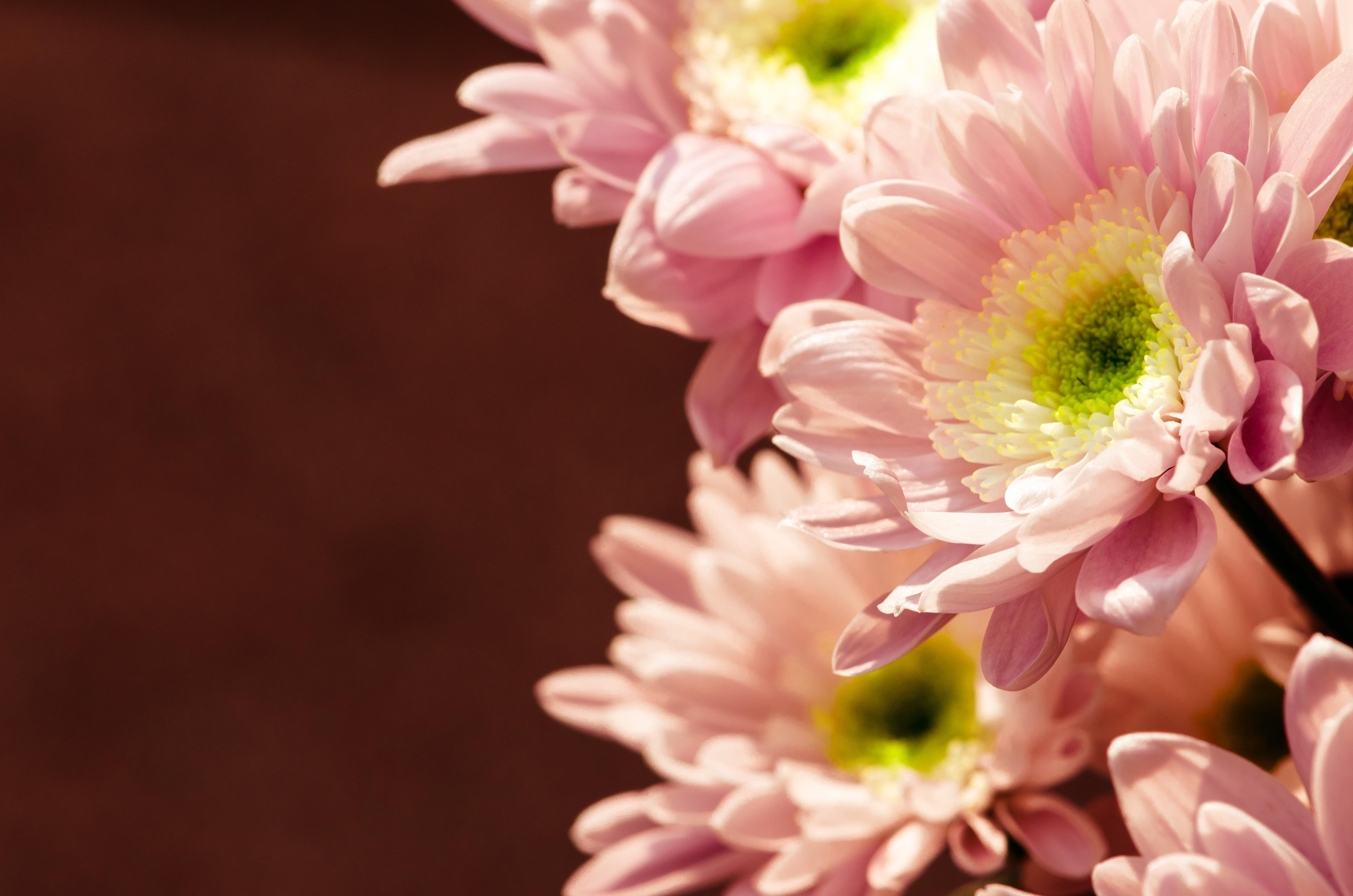 Florist atlanta ga flower shop near me vann jernigan florist call our flower shop at 404 881 9790 for beautiful floral arrangements izmirmasajfo