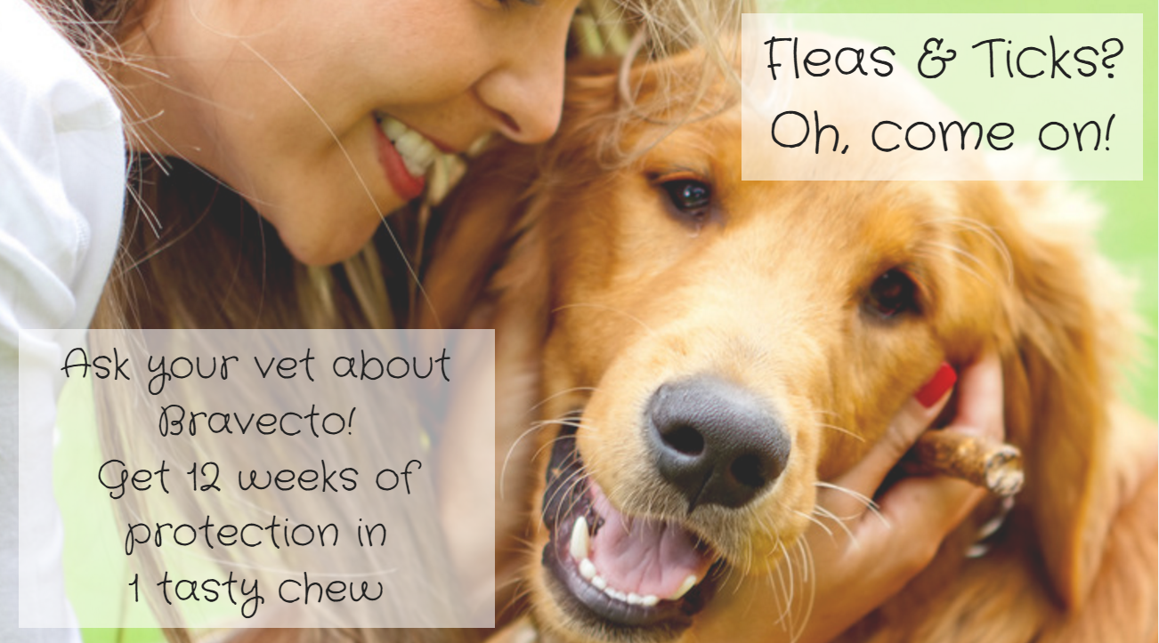 flea and tick bravecto