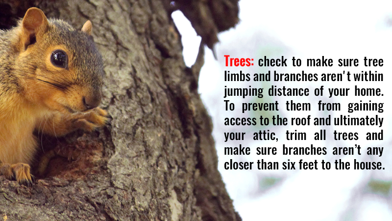Trees: check to make sure tree limbs and branches aren't within jumping distance of your home. To prevent them from gaining access to the roof and ultimately your attic, trim all trees and make sure branches aren't any closer than six feet to the house.