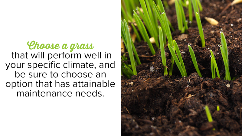 Choose a grass that will perform well in your specific climate, and be sure to choose an option that has attainable maintenance needs.