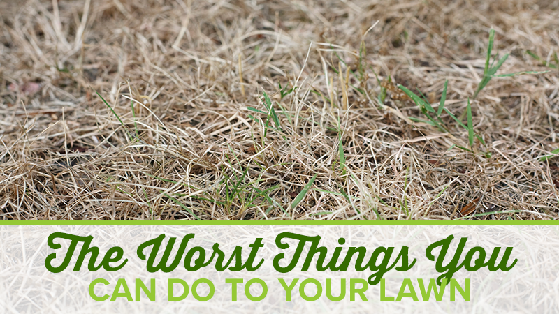 The Worst Things You Can Do To Your Lawn
