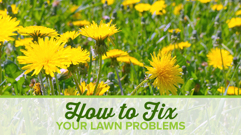 How to Fix Your Lawn Problems