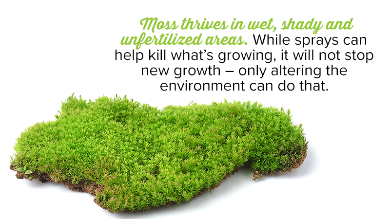 Moss thrives in wet, shady and unfertilized areas. While sprays can help kill what's growing, it will not stop new growth – only altering the environment can do that.