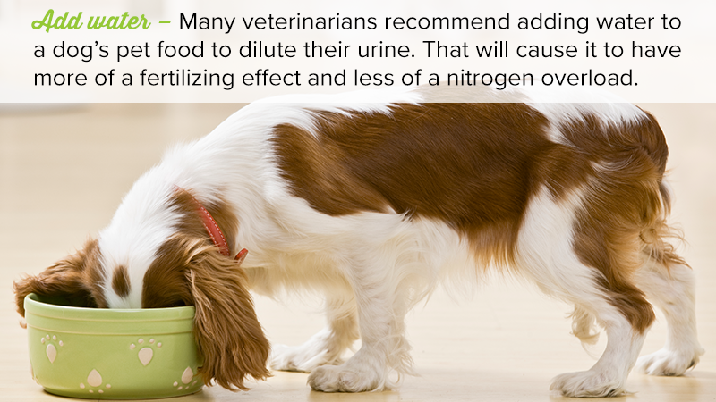 Add water – Many veterinarians recommend adding water to a dog's pet food to dilute their urine. That will cause it to have more of a fertilizing effect and less of a nitrogen overload.