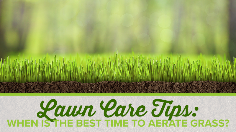 Lawn Care Tips: When is the Best Time to Aerate Grass?