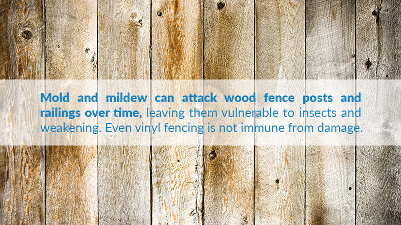 Mold and mildew can attack wood fence posts and railings over time, leaving them vulnerable to insects and weakening. Even vinyl fencing is not immune from damage.