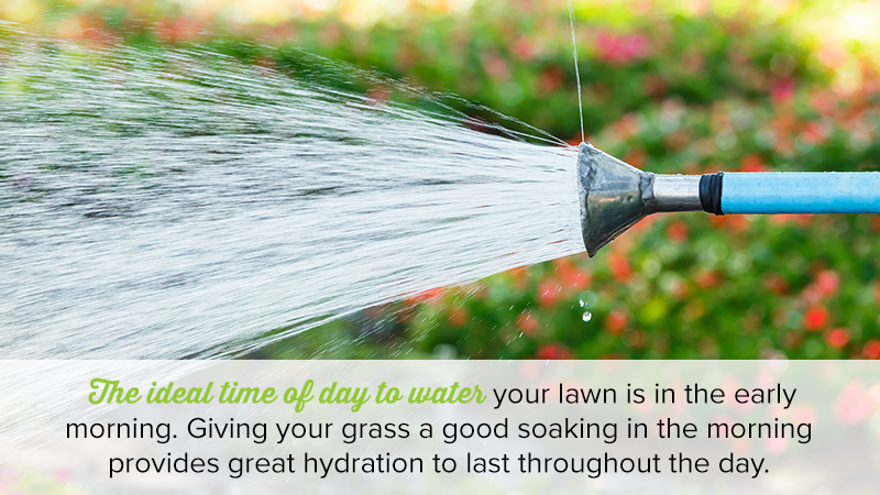 The ideal time of day to water your lawn is in the early morning. Giving your grass a good soaking in the morning provides great hydration to last throughout the day.