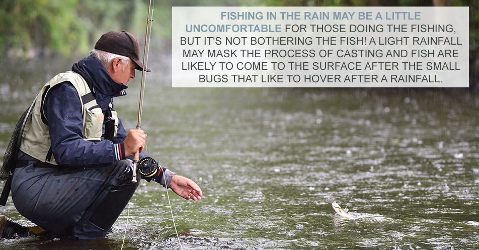 Fishing in the rain may be a little uncomfortable for those doing the fishing, but it's not bothering the fish! A light rainfall may mask the process of casting and fish are likely to come to the surface after the small bugs that like to hover after a rainfall.