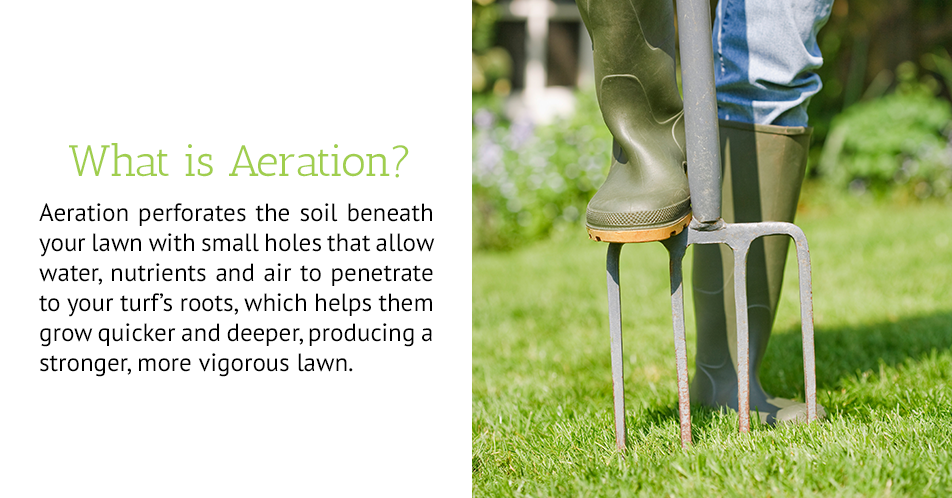 Aeration perforates the soil beneath your lawn with small holes that allow water, nutrients and air to penetrate to your turf's roots, which helps them grow quicker and deeper, producing a stronger, more vigorous lawn.