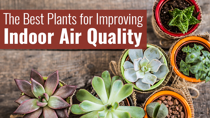 The Best Plants for Improving Indoor Air Quality