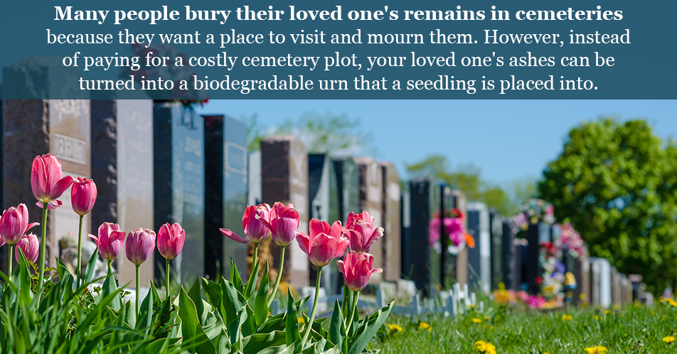 Many people bury their loved one's remains in cemeteries because they want a place to visit and mourn them. However, instead of paying for a costly cemetery plot, your loved one's ashes can be turned into a biodegradable urn that a seedling is placed into.