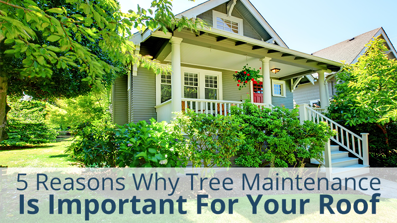 5 Reasons Why Tree Maintenance Is Important For Your Roof