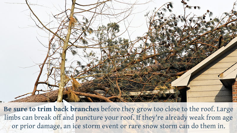 Be sure to trim back branches before they grow too close to the roof. Large limbs can break off and puncture your roof. If they're already weak from age or prior damage, an ice storm event or rare snow storm can do them in.