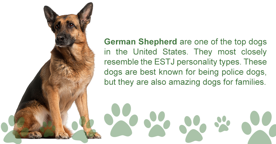 German Shepherd are one of the top dogs in the United States. They most closely resemble the ESTJ personality types. These dogs are best known for being police dogs, but they are also amazing dogs for families.