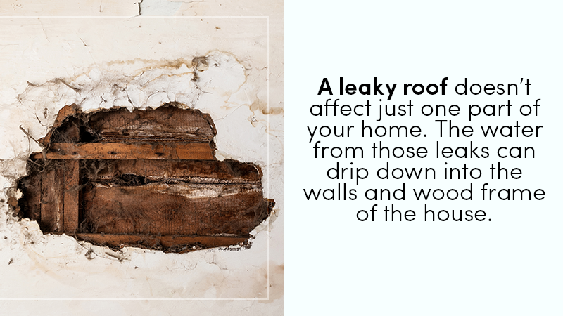 A leaky roof doesn't just affect that part of your home. The water from these leaks can end up dripping down to your walls and the wood frame of your home.