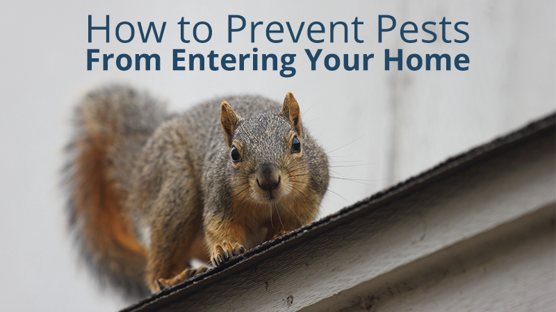 How to Prevent Pests from Entering Your Home
