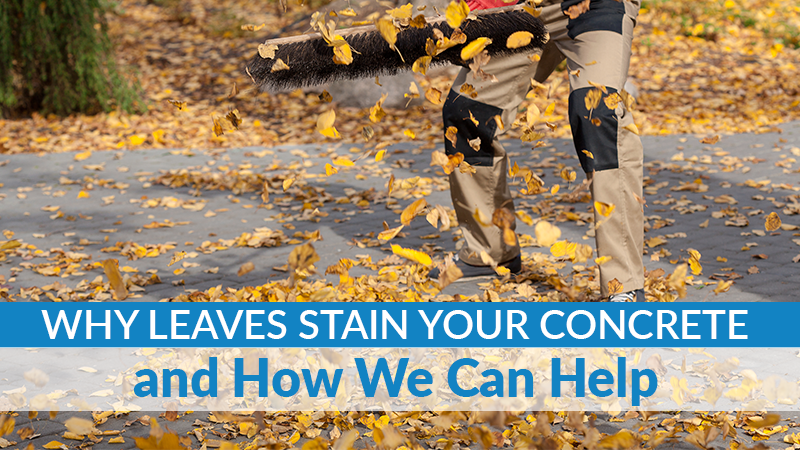 Why Leaves Stain Your Concrete and How We Can Help