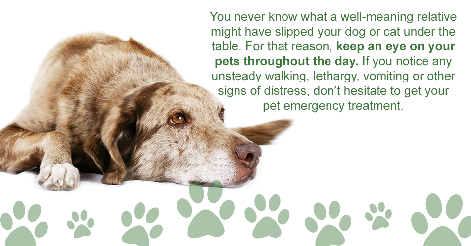 You never know what a well-meaning relative might have slipped your dog or cat under the table. For that reason, keep an eye on your pets throughout the day. If you notice any unsteady walking, lethargy, vomiting or other signs of distress, don't hesitate to get your pet emergency treatment.
