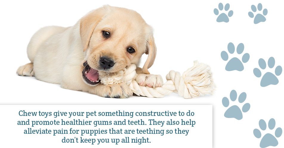 Chew toys give your pet something constructive to do and promote healthier gums and teeth. They also help alleviate pain for puppies that are teething so they don't keep you up all night.