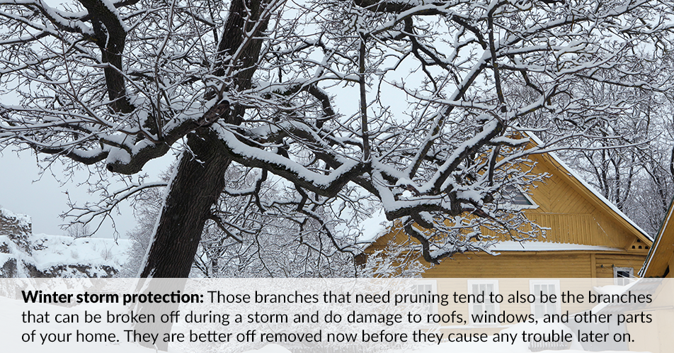 Winter storm protection: Those branches that need pruning tend to also be the branches that can be broken off during a storm and do damage to roofs, windows, and other parts of your home. They are better off removed now before they cause any trouble later on.