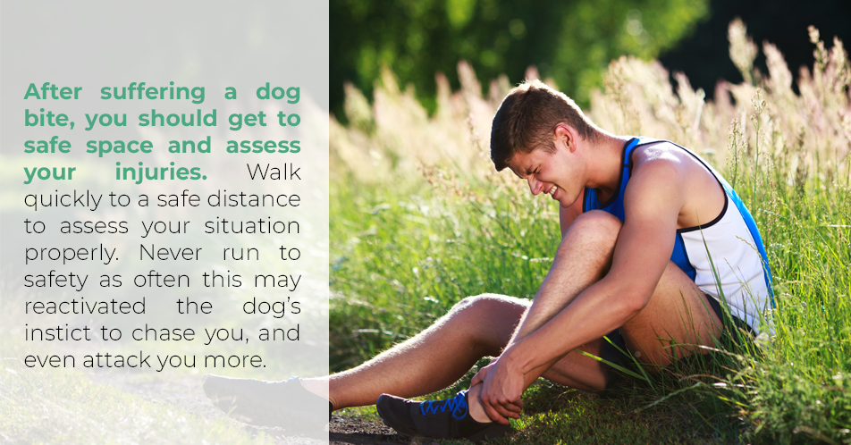 After suffering a dog bit, you should get to a safe space and assess your injuries.