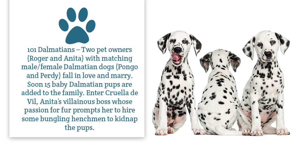 101 Dalmatians – Two pet owners (Roger and Anita) with matching male/female Dalmatian dogs (Pongo and Perdy) fall in love and marry. Soon 15 baby Dalmatian pups are added to the family. Enter Cruella de Vil, Anita's villainous boss whose passion for fur prompts her to hire some bungling henchmen to kidnap the pups