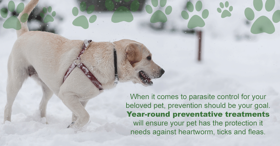 When it comes to pest control for your beloved pet, prevention should be your goal. Year-round preventative treatments will ensure your pet has the protection it needs against heartworm, ticks and fleas.