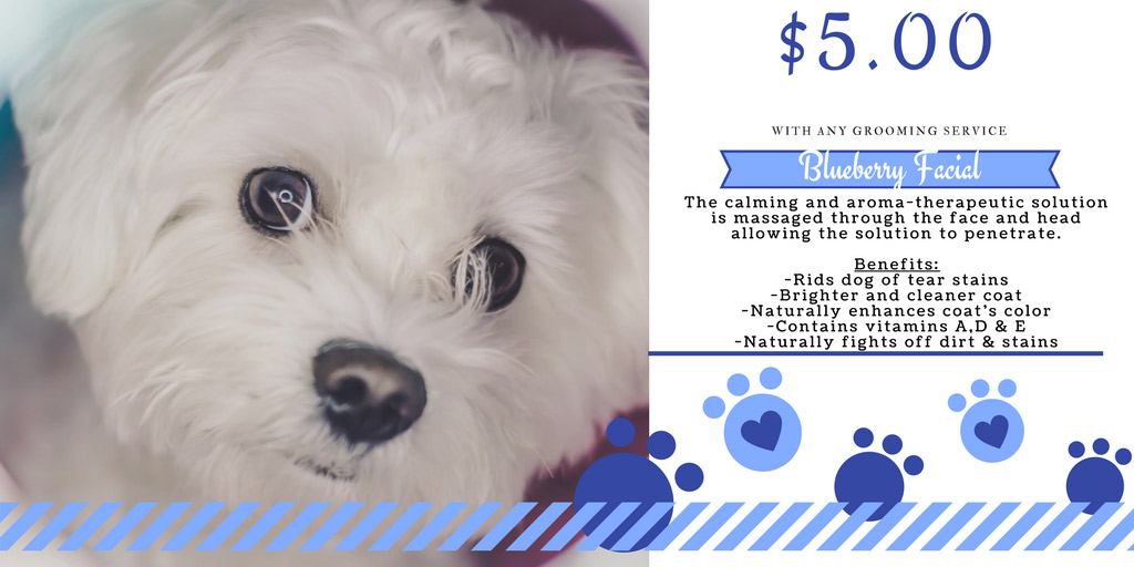 Pet grooming pearland tx pet salon near me pampered for Dog grooming salons near me
