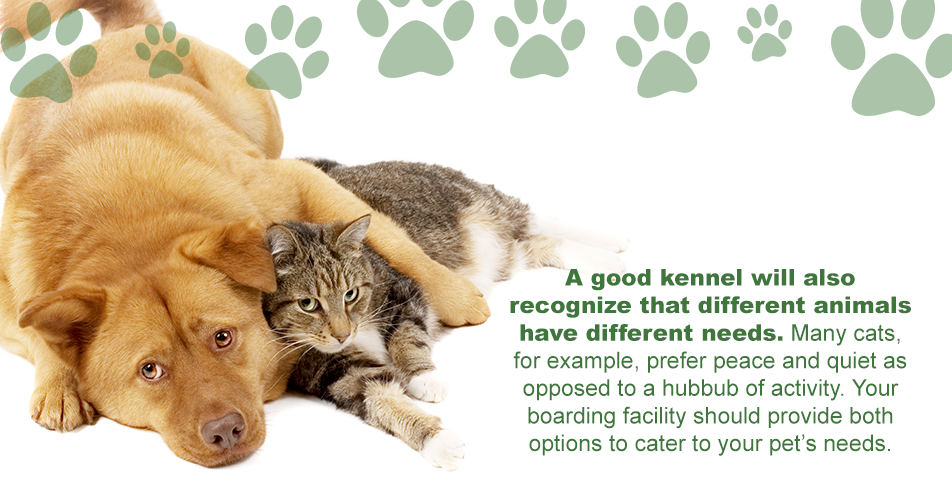 A good kennel will also recognize that different animals have different needs. Many cats, for example, prefer peace and quiet as opposed to a hubbub of activity. Your boarding facility should provide both options to cater to your pet's needs.