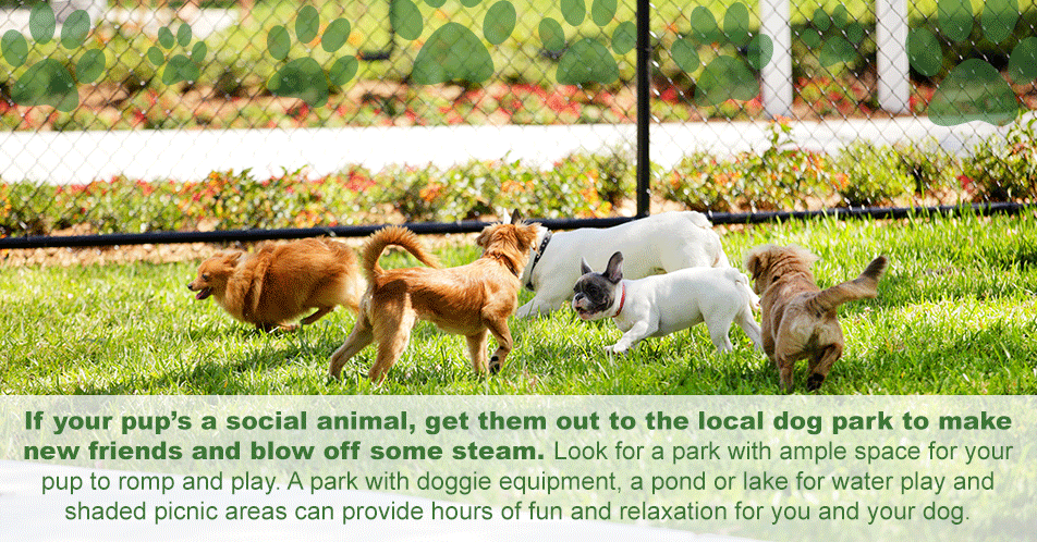 Is your pup a social animal? Take him to the dog park to make new friends and blow off steam. Find one with ample space for your pup to romp and play. A park with doggie equipment, a pont for water play and shaded picnic areas can offer hours of fun and relaxation for you and your dog.