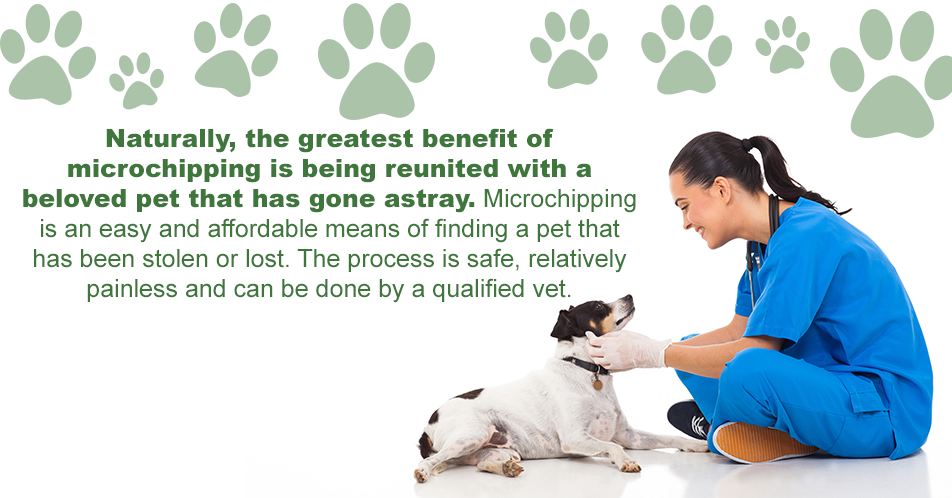 Naturally, the greatest benefit of microchipping is being reunited with a beloved pet that has gone astray. Microchipping is an easy and affordable means of finding a pet that has been stolen or lost. The process is safe, relatively painless and can be done by a qualified vet.