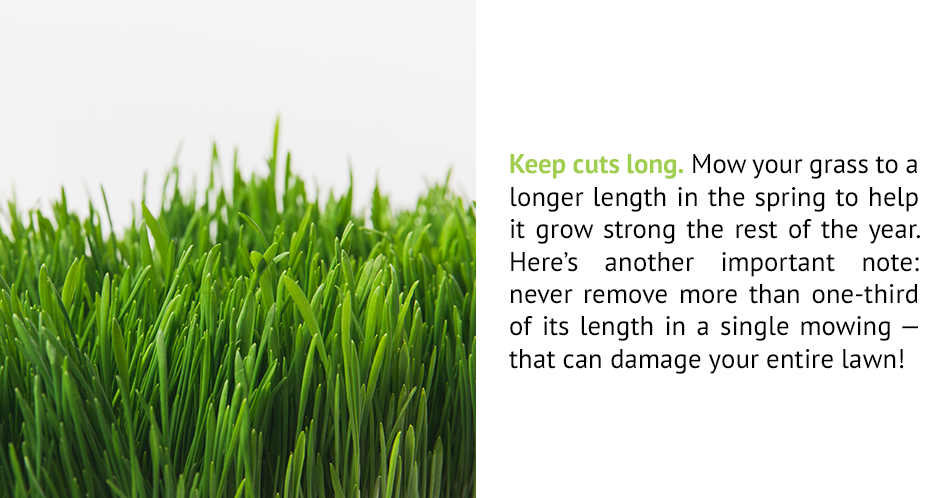 Keep cuts long. Mow your grass to a longer length in the spring to help it grow strong the rest of the year. Here's another important note: never remove more than one-third of its length in a single mowing — that can damage your entire lawn!