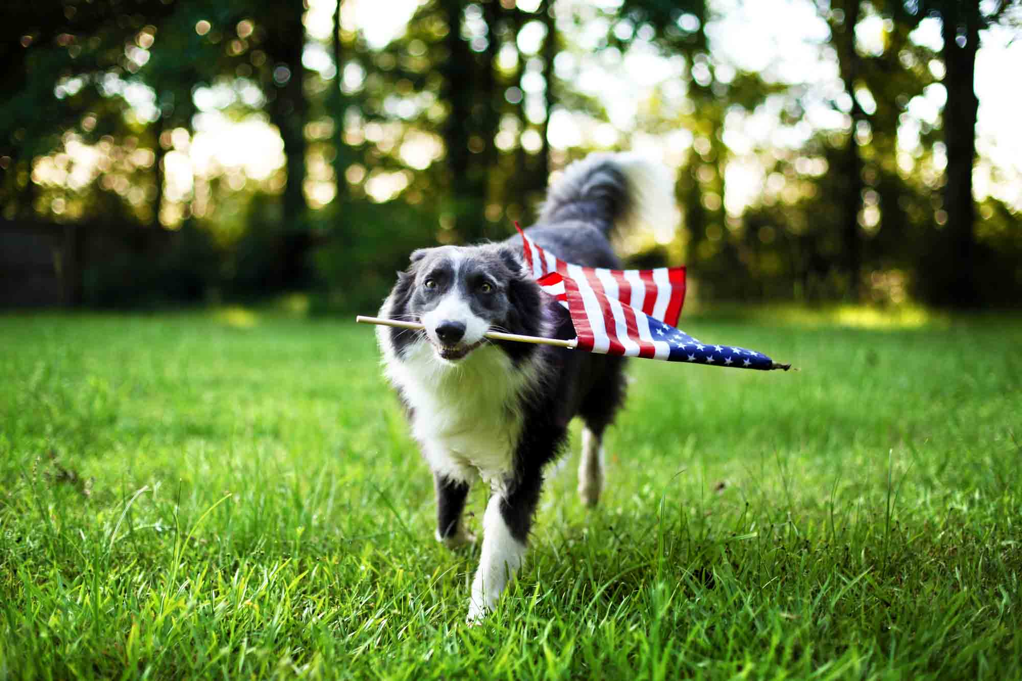 Pet groomers san diego pet groomer near me furry friends dog and pet groomers san diego pet groomer near me furry friends dog and cat grooming solutioingenieria Image collections