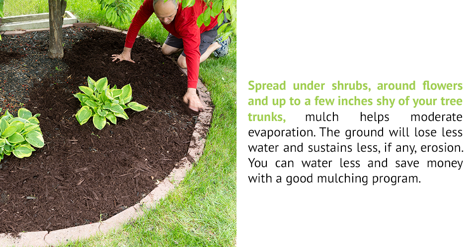 Spread under shrubs, around flowers and up to a few inches shy of your tree trunks, mulch helps moderate evaporation. The ground will lose less water and sustains less, if any, erosion. You can water less and save money with a good mulching program.  or