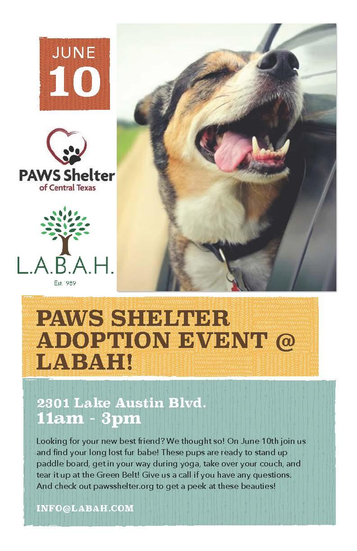paws adoption flyer