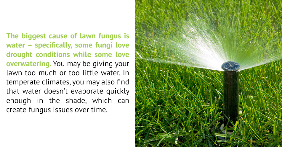 The biggest cause of lawn fungus is water – specifically, some fungi love drought conditions while some love overwatering. You may be giving your lawn too much or too little water. In temperate climates, you may also find that water doesn't evaporate quickly enough in the shade, which can create fungus issues over time.