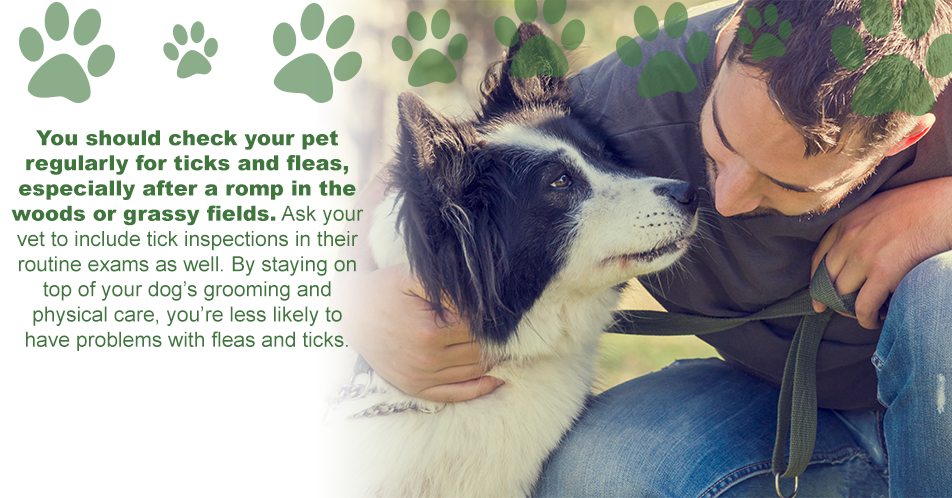 You should check your pet regularly for ticks and fleas, especially after a romp in the woods or grassy fields. Ask your vet to include tick inspections in their routine exams as well. By staying on top of your dog's grooming and physical care, you're less likely to have problems with fleas and ticks.