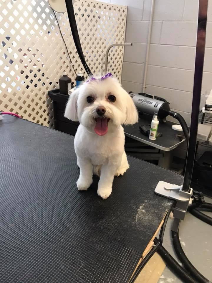 Grooming aurora co grooming facility near me dog e fresh read more reviews solutioingenieria Choice Image