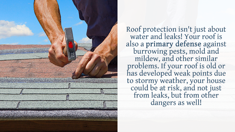 Roof protection isn't just about water and leaks! Your roof is also a primary defense against burrowing pests, mold and mildew, and other similar problems. If your roof is old or has developed weak points due to stormy weather, your house could be at risk, and not just from leaks, but from other dangers as well!