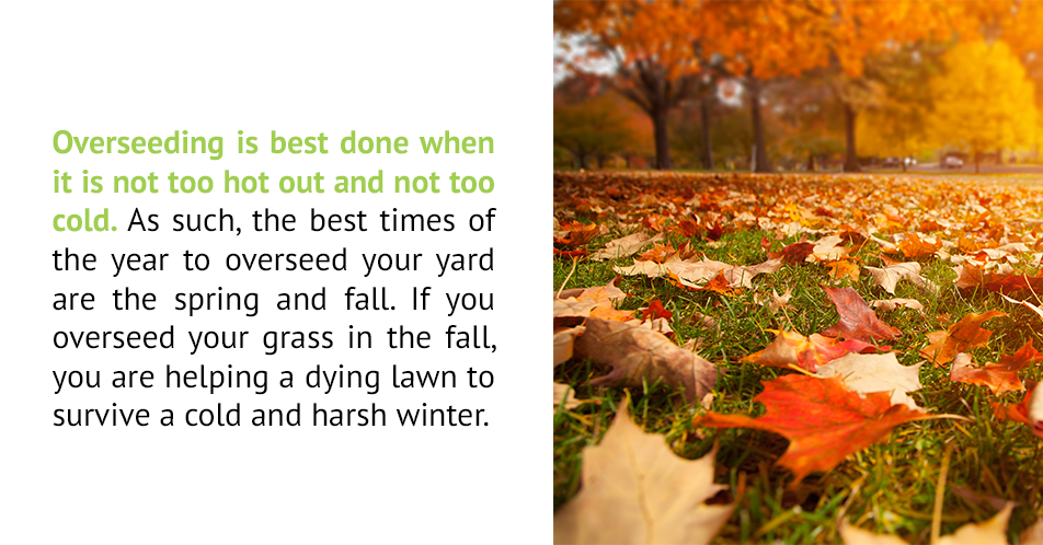 Overseeding is best done when it is not too hot out and not too cold. As such, the best times of the year to overseed your yard are the spring and fall. If you overseed your grass in the fall, you are helping a dying lawn to survive a cold and harsh winter.