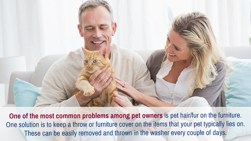 One of the most common problems among pet owners is pet hair/fur on the furniture. One solution is to keep a throw or furniture cover on the items that your pet typically lies on. These can be easily removed in and thrown in the washer every couple of days.