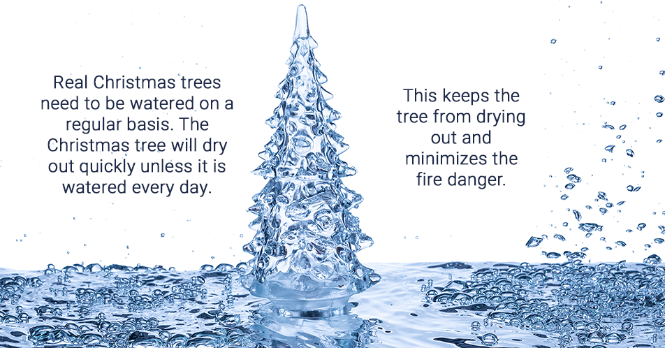 Real Christmas trees need to be watered on a regular basis. The Christmas tree will dry out quickly unless it is watered every day. This keeps the tree from drying out and minimizes the fire danger.