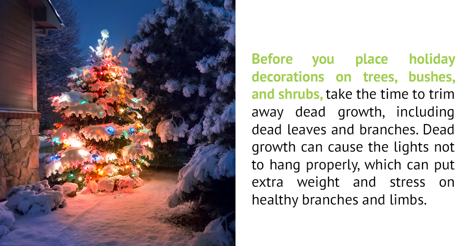 Before you place holiday decorations on trees, bushes, and shrubs, take the time to trim away dead growth, including dead leaves and branches. Dead growth can cause the lights not to hang properly, which can put extra weight and stress on healthy branches and limbs.
