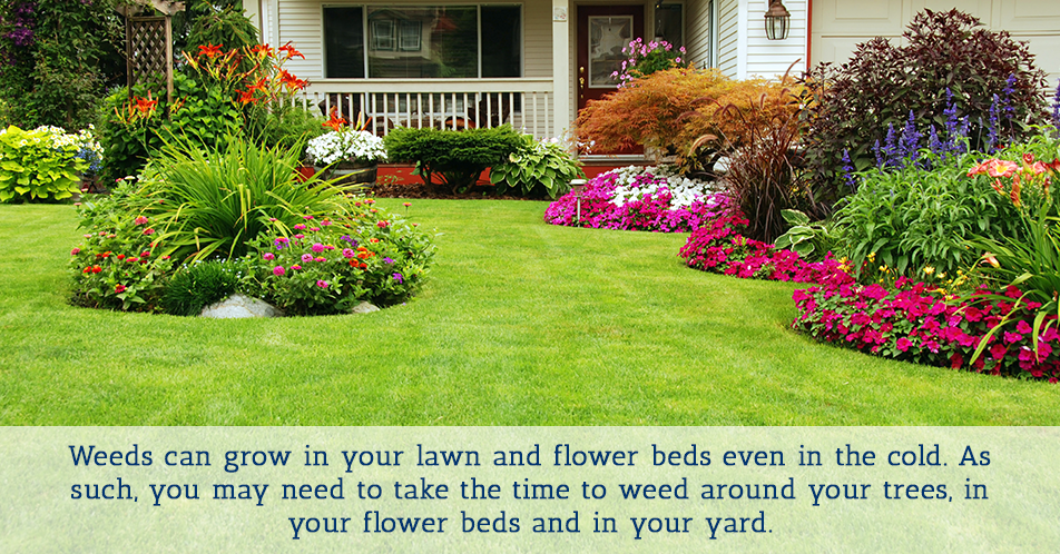 Weeds can grow in your lawn and flower beds even in the cold. As such, you may need to take the time to weed around your trees, in your flower beds and in your yard.