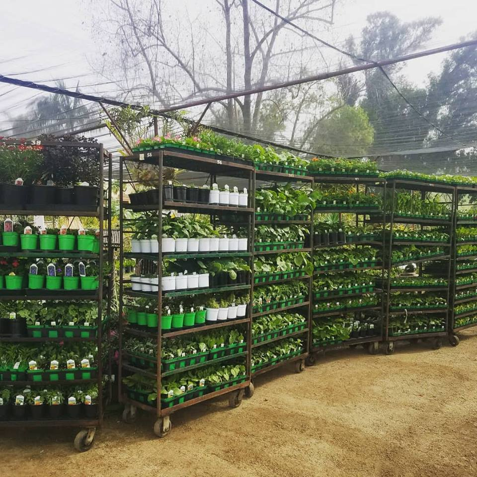 Plant Nursery Escondido Ca Plant Nursery Near Me El