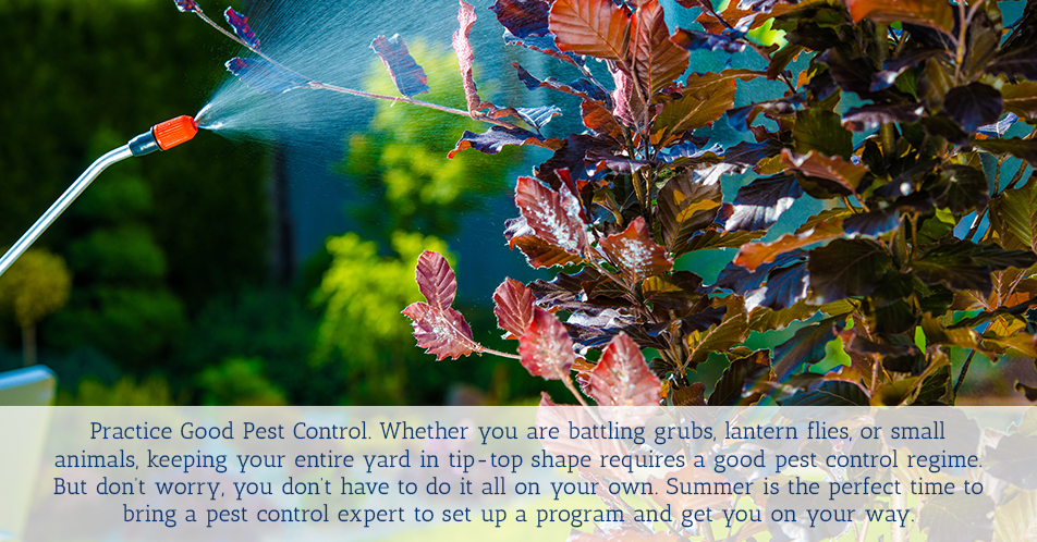 Practice Good Pest Control. Whether you are battling grubs, lantern flies, or small animals, keeping your entire yard in tip-top shape requires a good pest control regime. But don't worry, you don't have to do it all on your own. Spring is the perfect time to bring a pest control expert to set up a program and get you on your way.