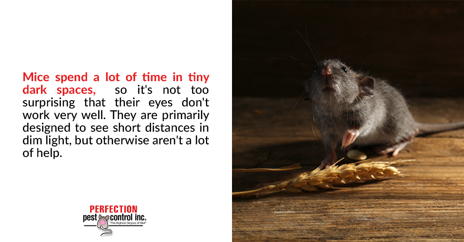 Mice spend a lot of time in tiny dark spaces, so it's not too surprising that their eyes don't work very well. They are primarily designed to see short distances in dim light, but otherwise aren't a lot of help.