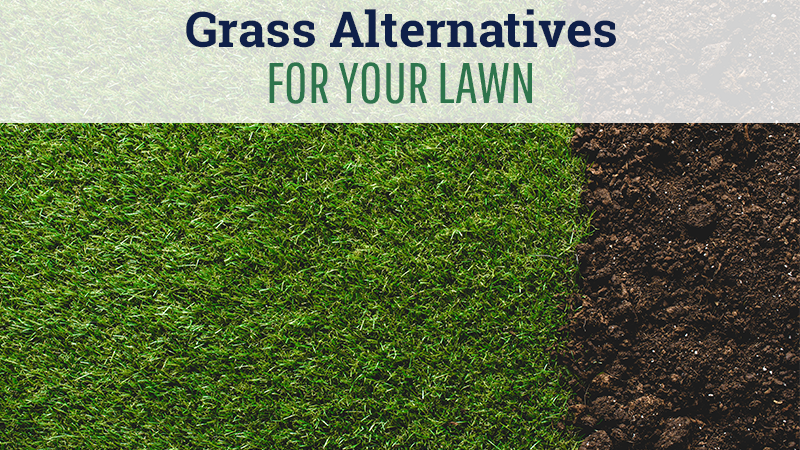 Grass Alternatives for Your Lawn
