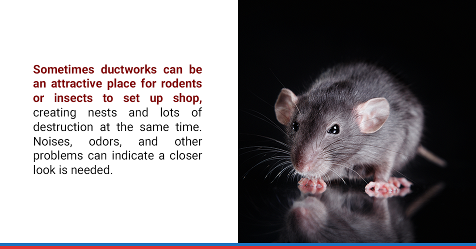 Sometimes ductworks can be an attractive place for rodents or insects to set up shop, creating nests and lots of destruction at the same time. Noises, odors, and other problems can indicate a closer look is needed.